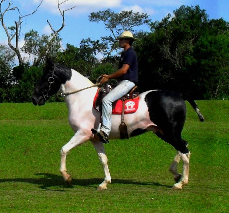 CRIAT�RIO J.U. - CAMPOLINA MARCHADOR E MUARES P�GA: Dezembro 2010