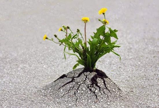 صور مذهلة: هناك أمل.. هناك حياة..