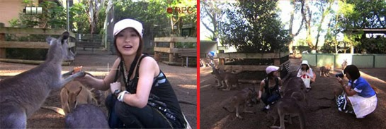 Misaki plays with the wallabies while Wakamura films.