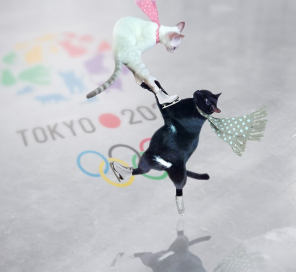 the Olympic cat