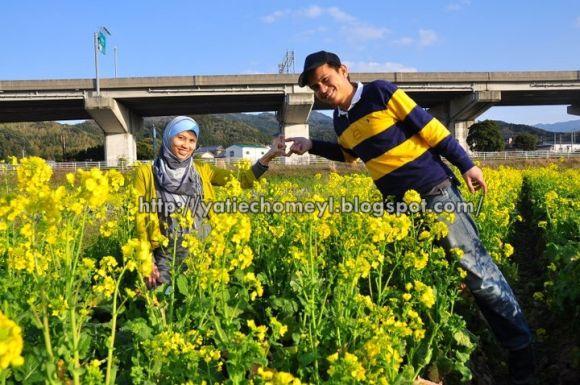 http://4.bp.blogspot.com/-27yf9VM9X2Q/TZvZu5TDJ8I/AAAAAAAAKpg/uOqD7z_QV38/s1600/yellow%2Brape1.jpg