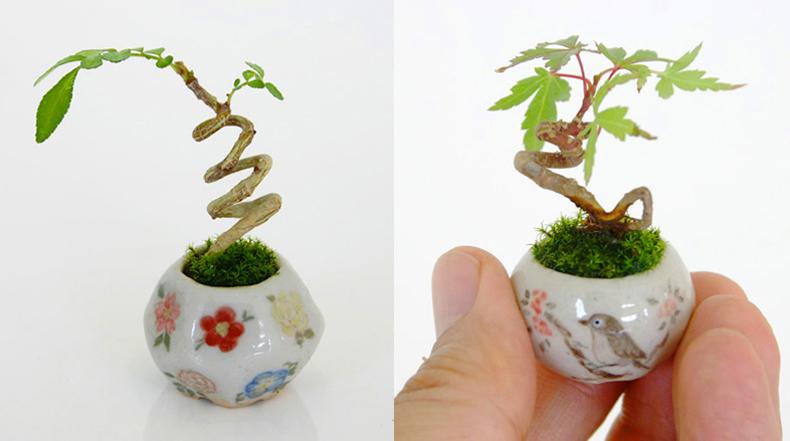 Ultra pequeñas plantas Bonsai dan un nuevo significado a la palabra miniatura