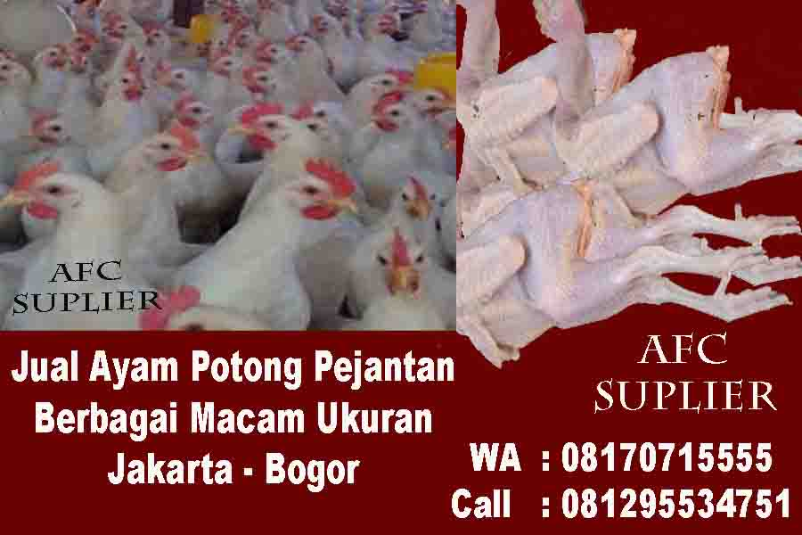 Ayam Pejantan