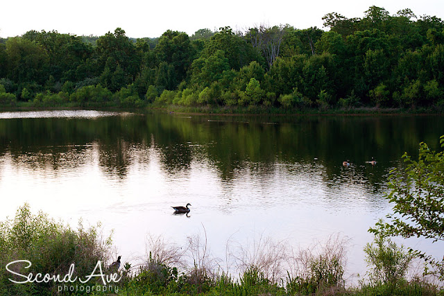 landscape, project 52, photoblog, parenting, photoshop, Virginia photographer, goose, seascape, lake, sunset, nature,