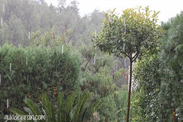 Vuelve a llover