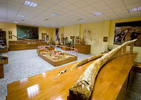 Τα μοναδικά προϊστορικά ευρήματα του μουσείου Φυσικής ιστορίας Γρεβενών