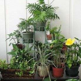 Houseplants Winter Care
