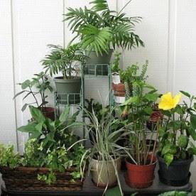 Houseplants Winter Care