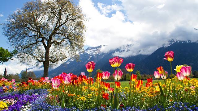 Campo de Flores a pie de Montaña