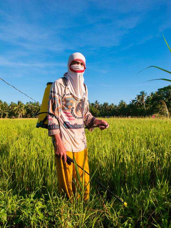 planting_rice