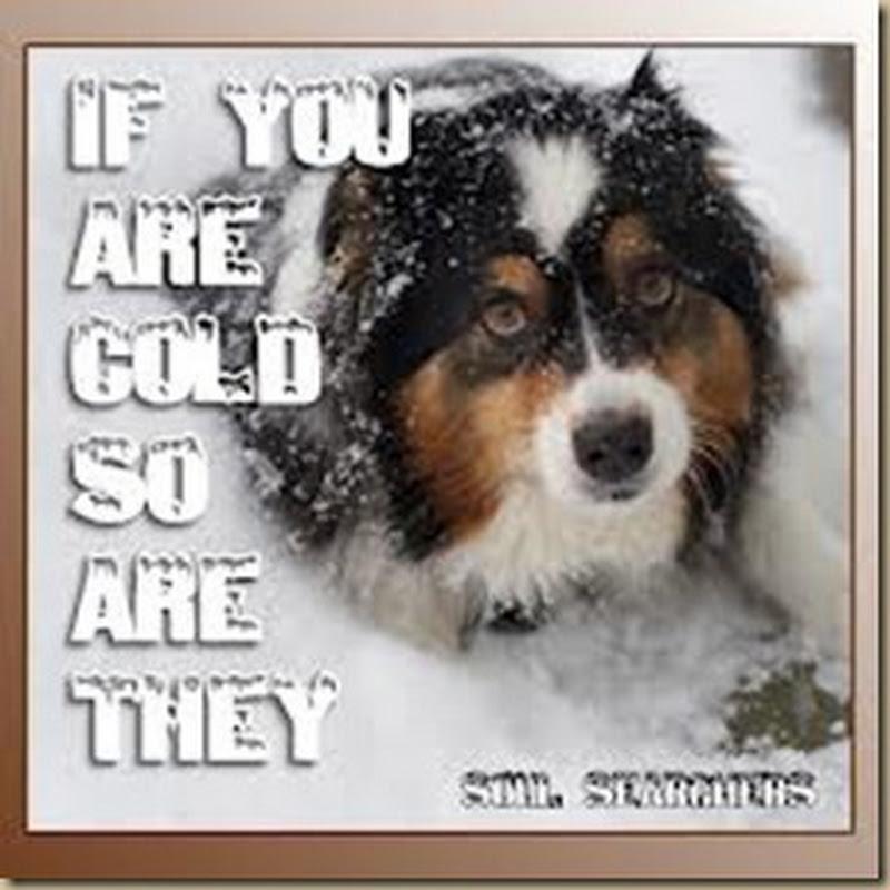 Aν κρυώνετε εσείς...