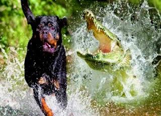 Il cane e il coccodrillo (Fedro)