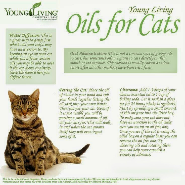 Best Essential Oils For Cats With Fleas
