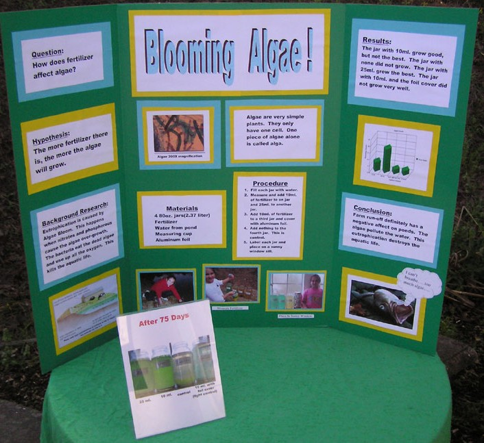 what is a background research in a science fair project