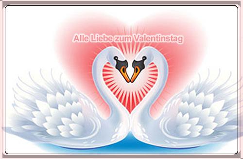Schwäne Valentinstag