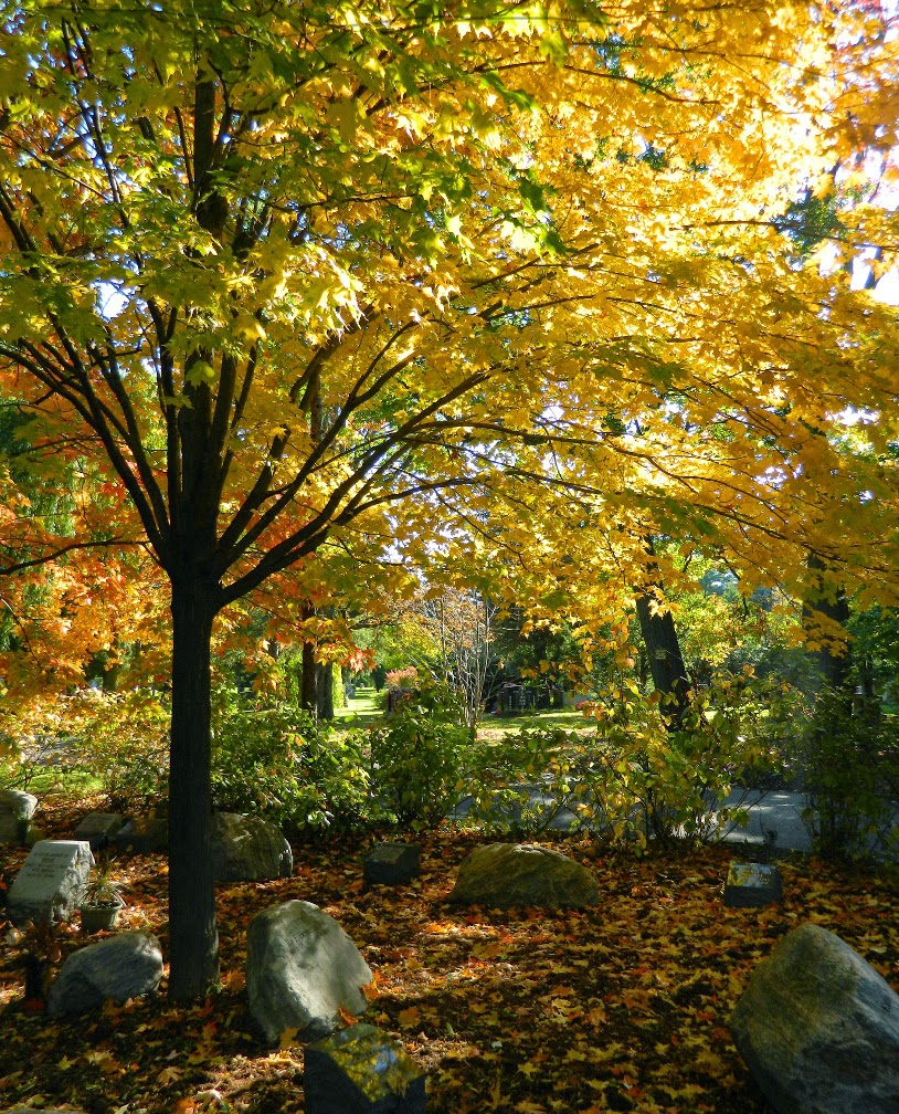 Mount Pleasant Cemetery Forest of Remembrance fall foliage by garden muses-not another Toronto gardening blog