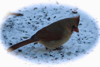 Birdie Birdie Birdie