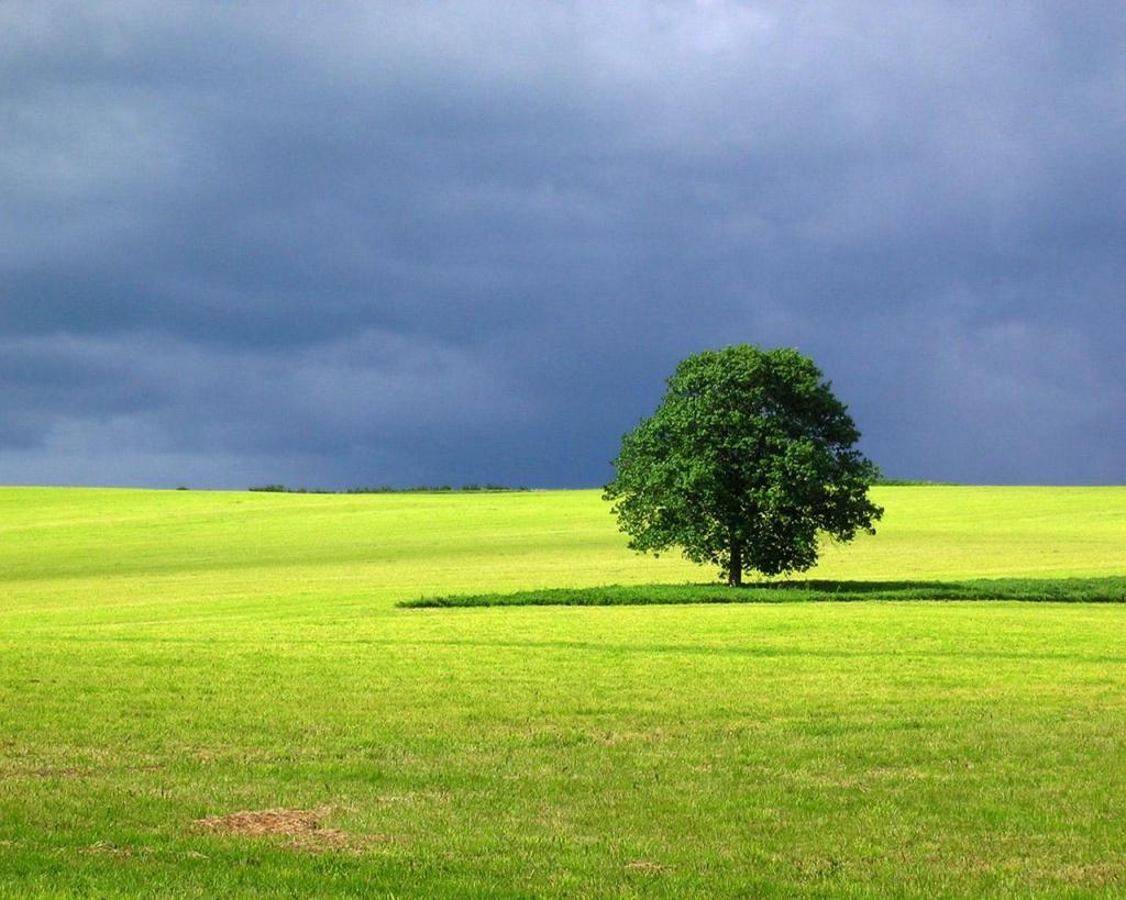 Simple Tree Landscape