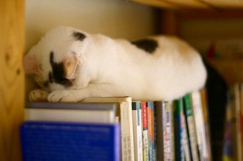 awkward cat sleeping positions