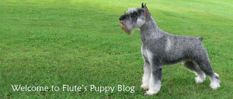 Flute's Pups