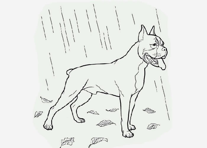 Boxer Coloring Page Free Coloring Pages And Coloring Boxer Coloring Pages
