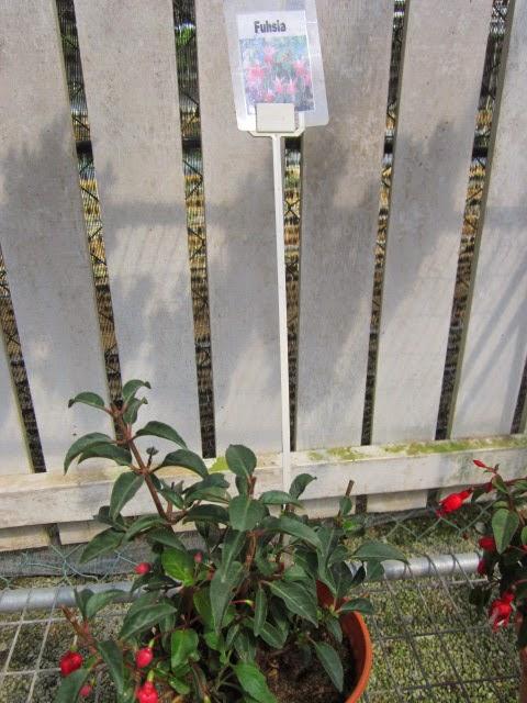 anthurium plant care instructions