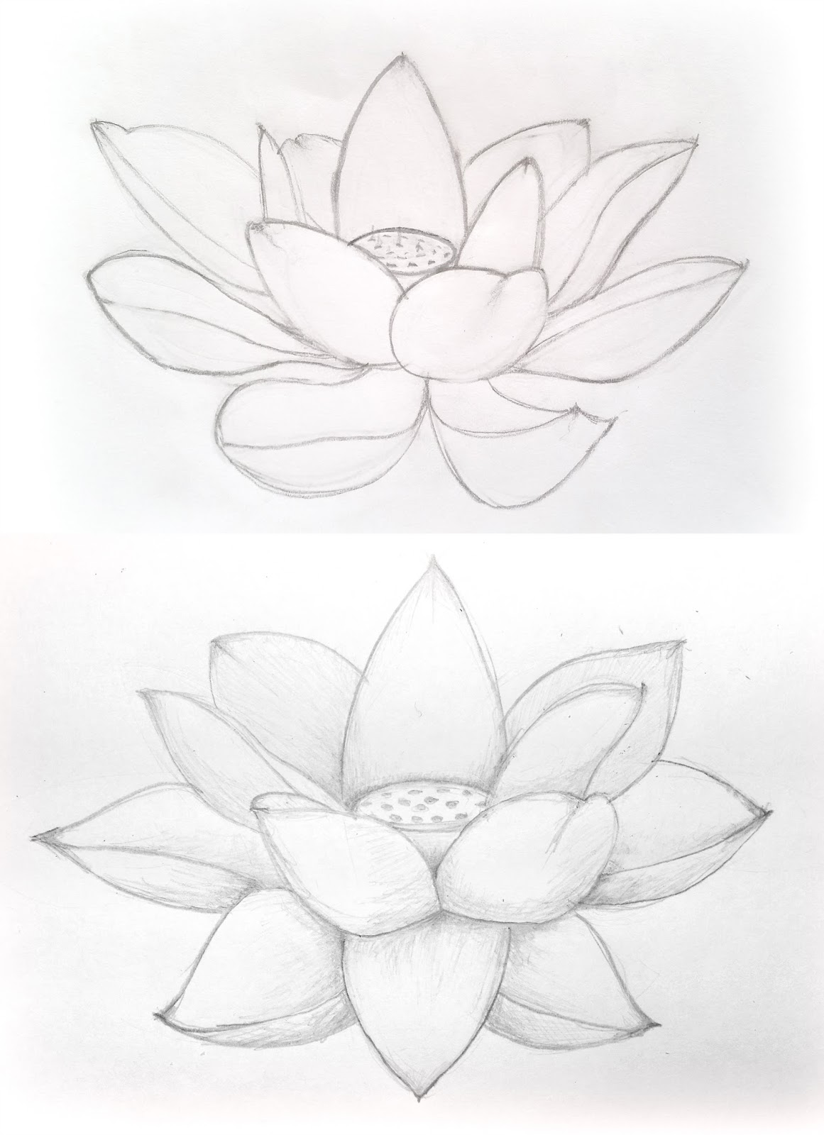 Mollys Art Blog Januarty Drawing Practice Continued Lotus Flowers