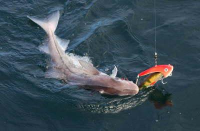 морская рыбалка для новичков