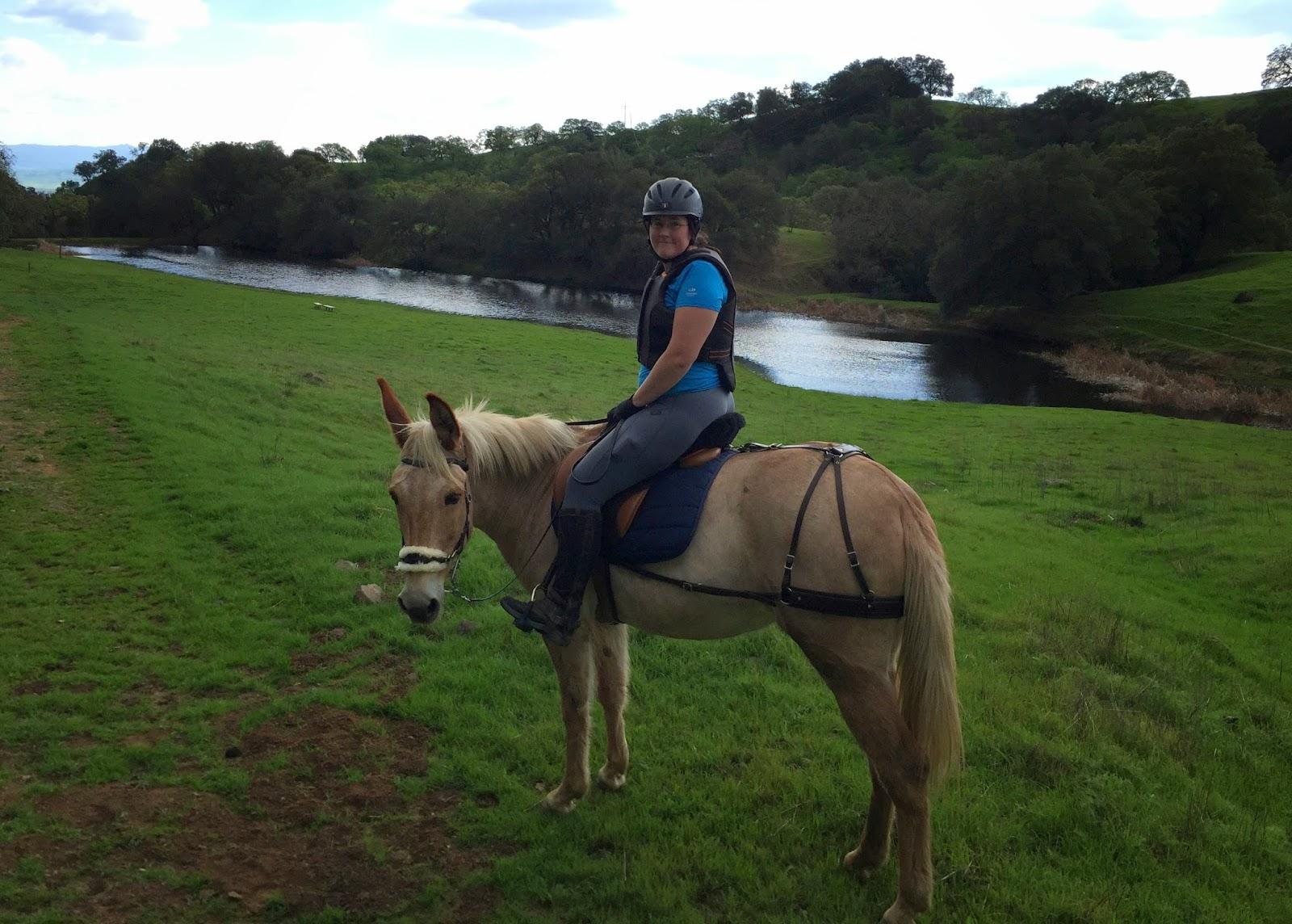 mule trail riding english saddle breeching palomino