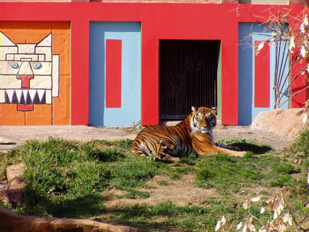 Jungle Park Tenerife Tiger