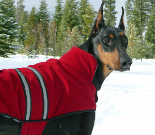 Is canine clothing necessary for Tahoe dogs?