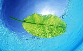 خلفية صورة ورقة خضراء ساقطة في البحر