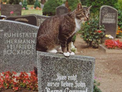 Cerita kucing setia : Toldo, setiap hari mengunjungi makam majikannya