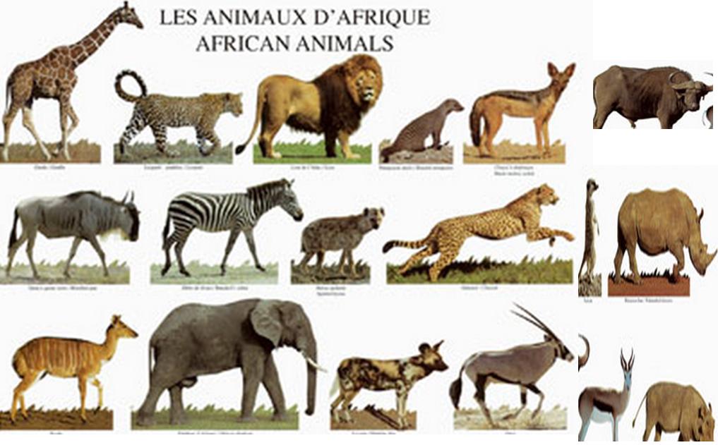 topics animals