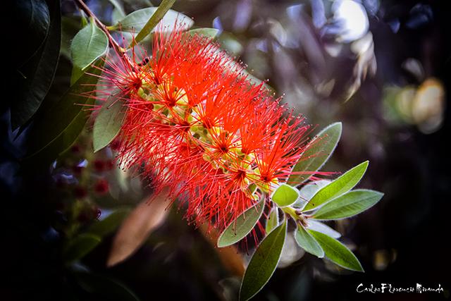 Una flor roja entre hojas verdes.