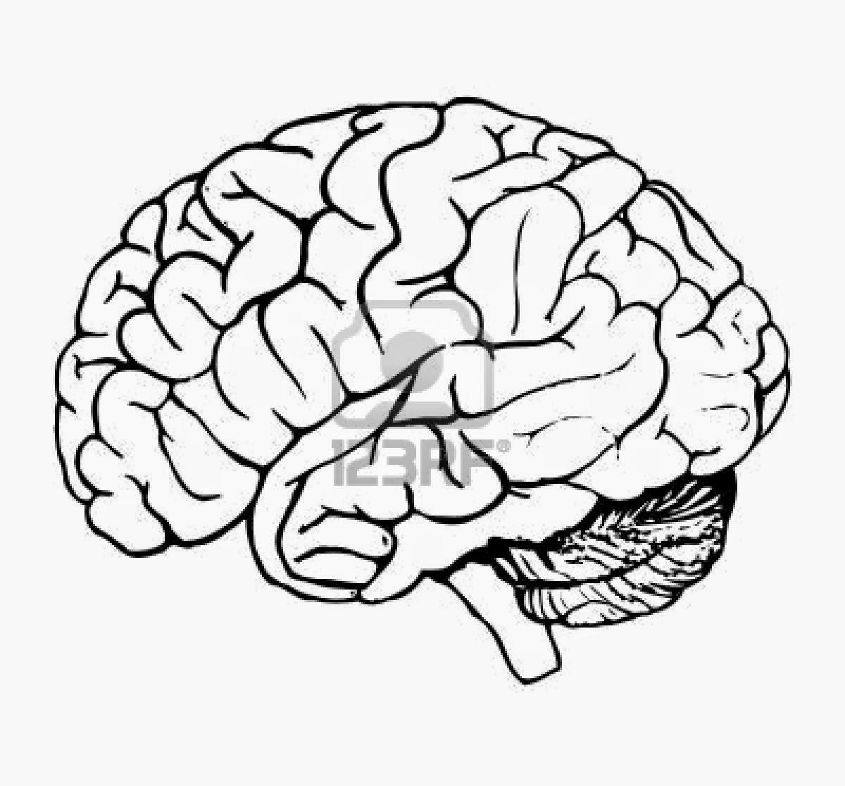 Sistema nervioso central y acotación sobre su funcionamiento en el ...