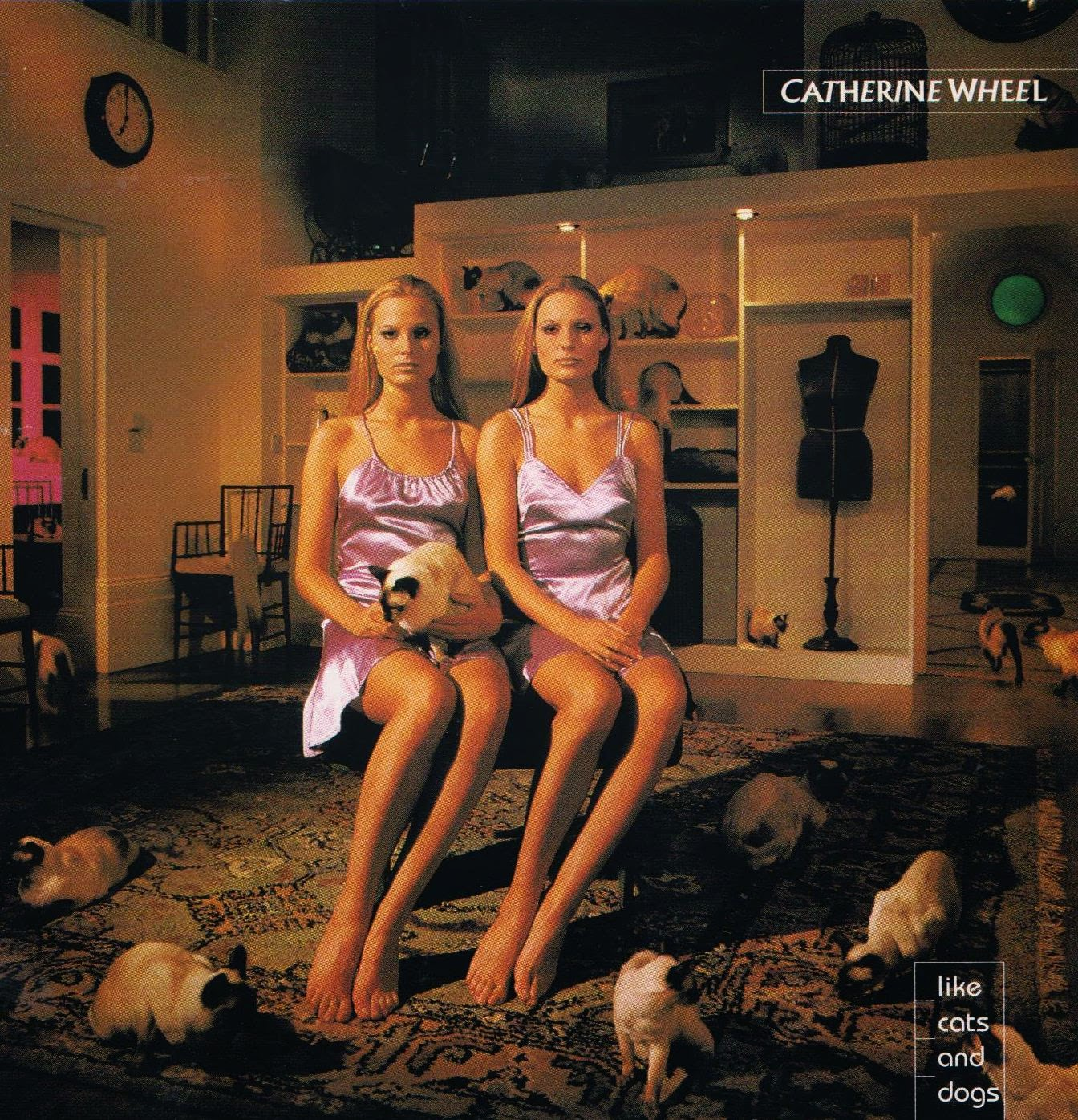 Catherine Wheel Like Cats And Dogs