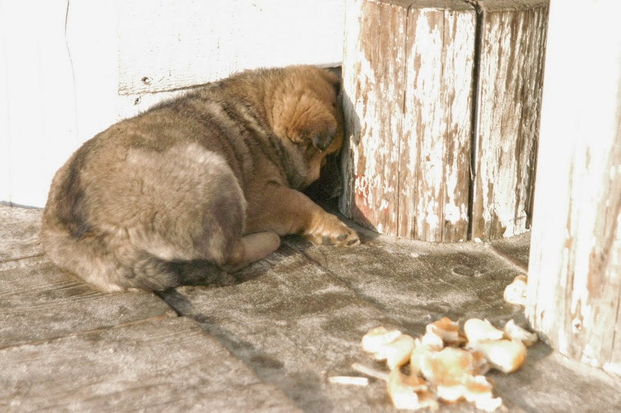 Фото Виталия Бабенко:бездомный щенок