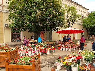 Flori de vanzare in Gheorgheni
