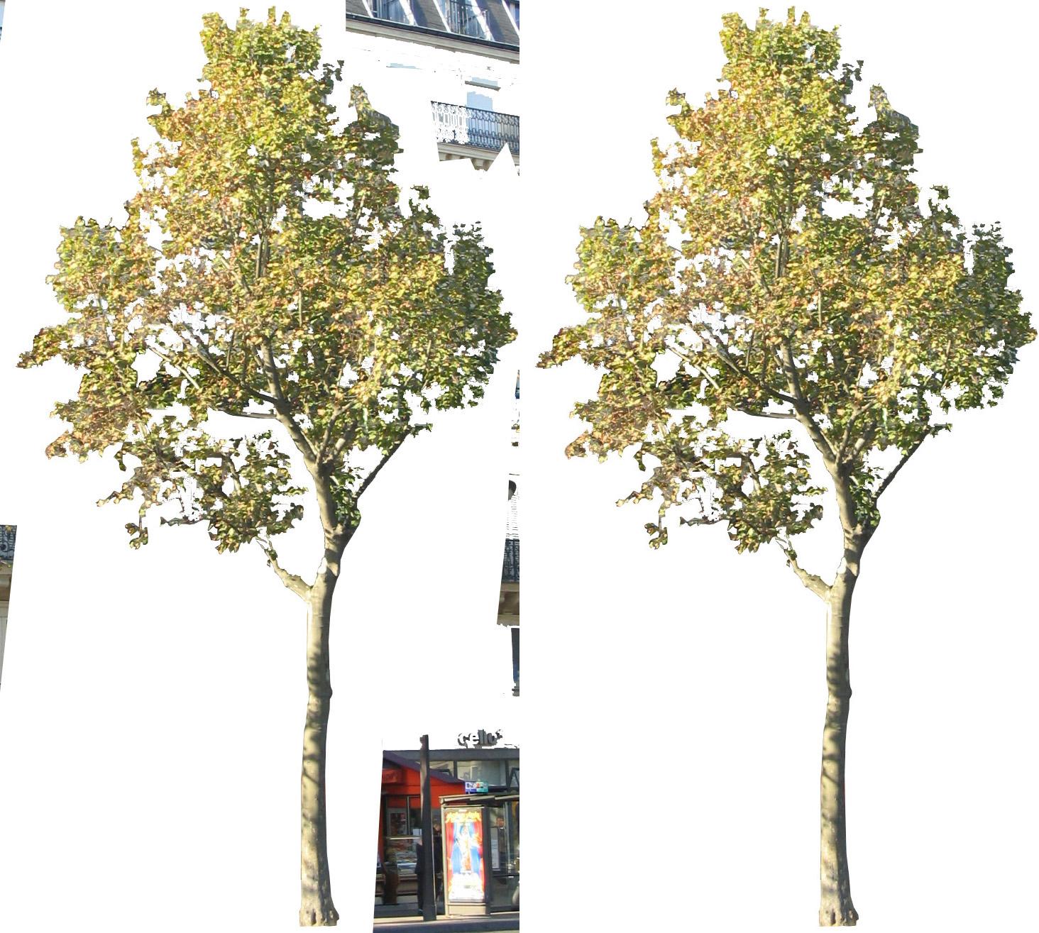 Oculus et manus plante un arbre for Plante un arbre