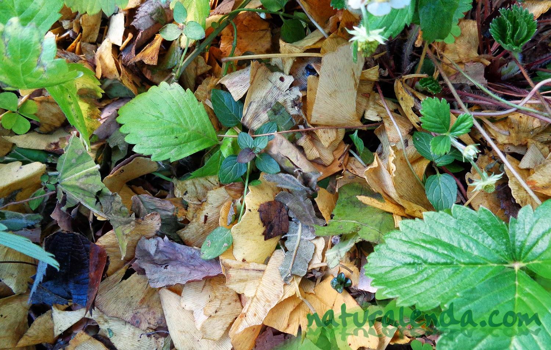acolchado de hojas