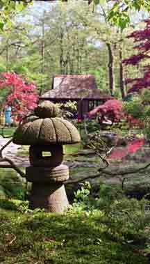 All about property small japanese garden concept for Small japanese garden plants