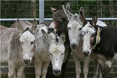How many donkeys does it take to run a government?