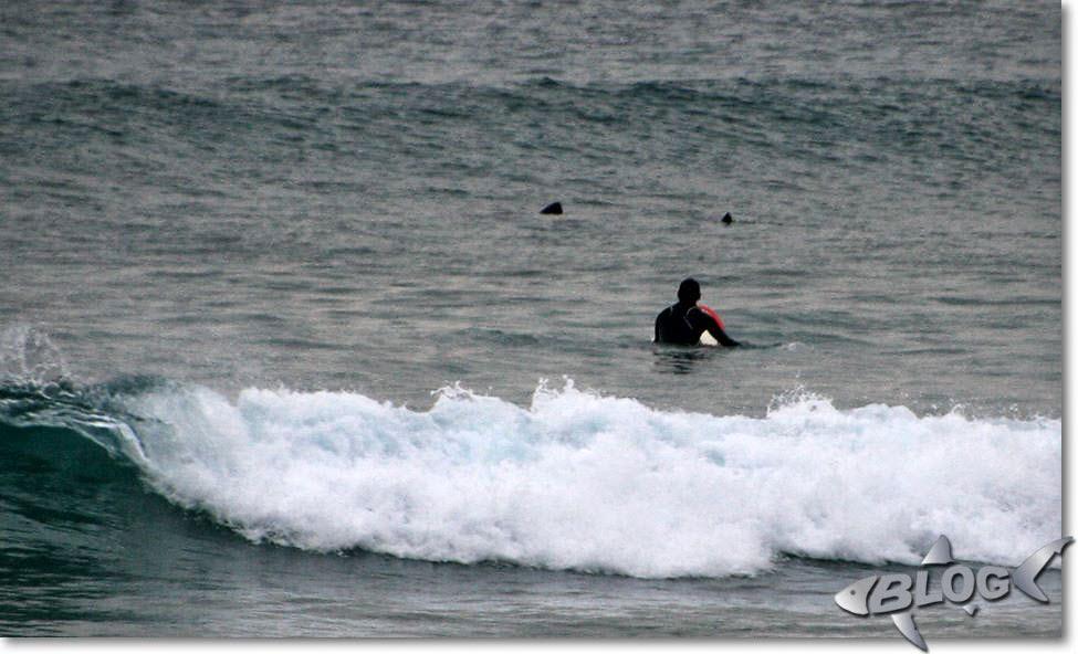 Tiburón peregrino en la playa de El Sardinero, Santander