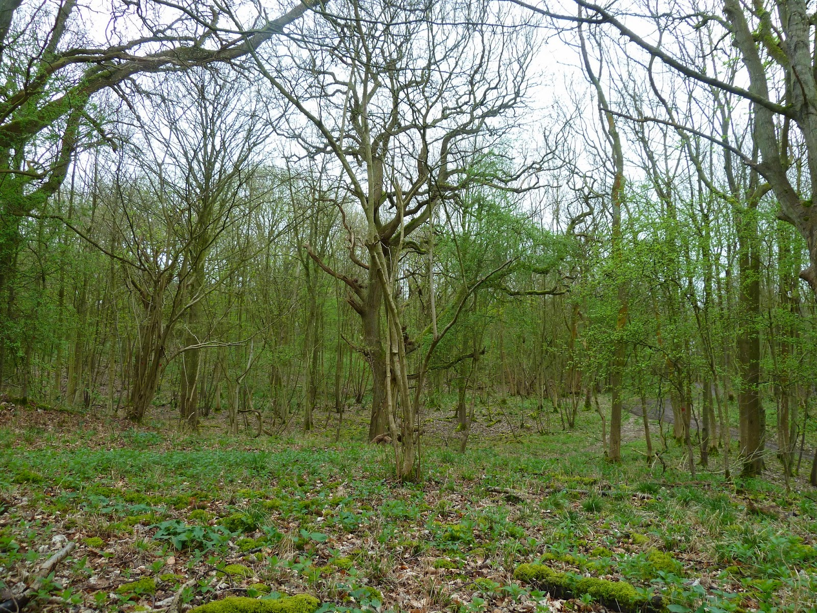 Tiny pathways in the magical Wytham Woods, 6th April 2014