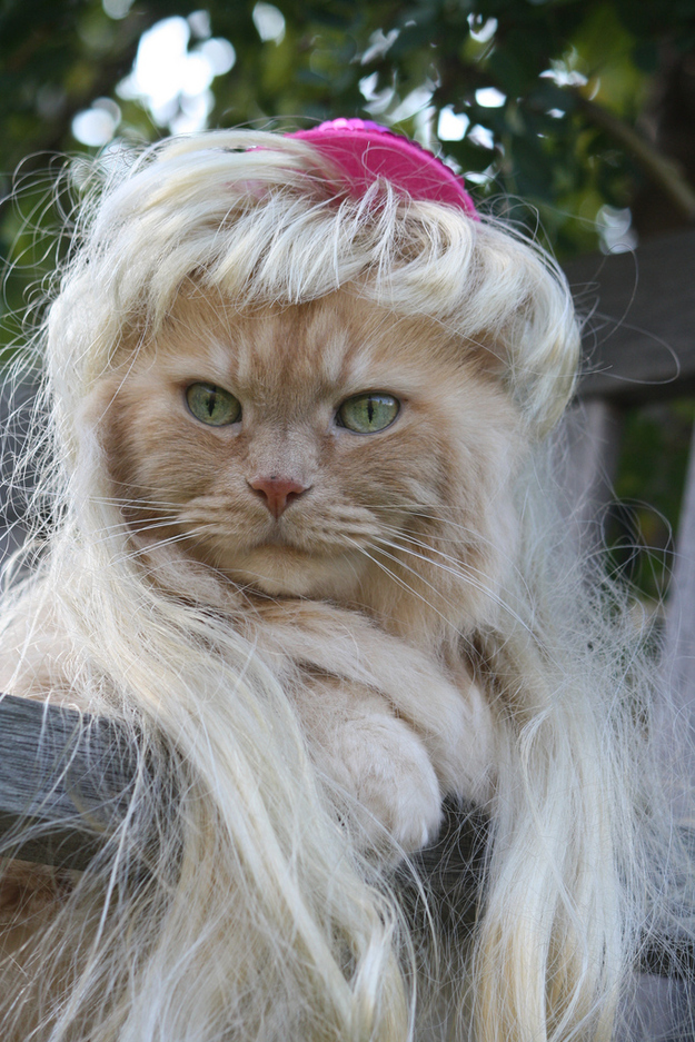 Wigs On Cats 8