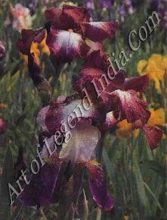 Purple irises Monet loved irises, and planted them all round the fringes of the waterlily pond; they appear in many of his later paintings. 'I perhaps owe having become a painter to flowers', he once said.