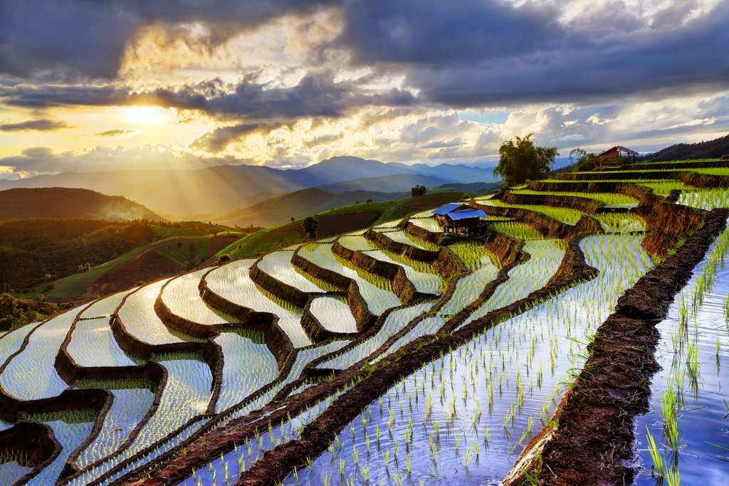 Rice terraces of Chiang Mai, Thailand