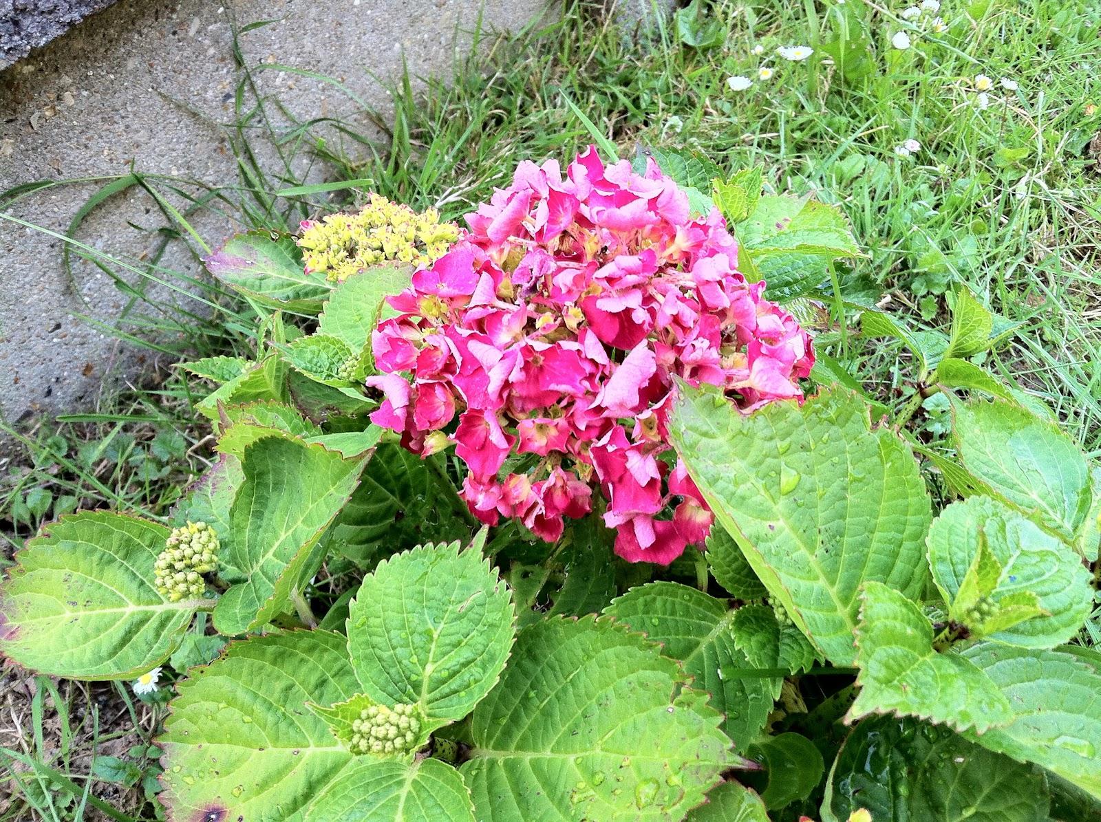 Mon jardin imparfait explosion for Le jardin imparfait