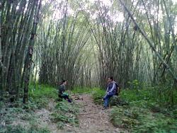 Komsing Bamboo Park, Komsing, Arunachal Pradesh